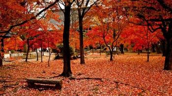 HÀ NỘI – OSAKA – KOBE – KYOTO – FUJI – HAKONE – TOKYO – HÀ NỘI