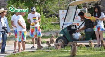 Tour du lịch khám phá đảo khỉ Sơn Hầu Vương ở Nha Trang