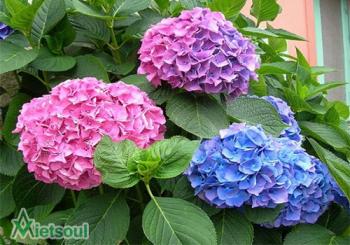 Những loại hoa đặc trưng ở Đà Lạt